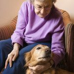 How to Choose the Right Pet for Elderly People