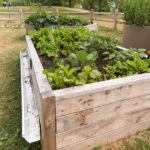 Benefits of Container Gardens for Homebound Seniors